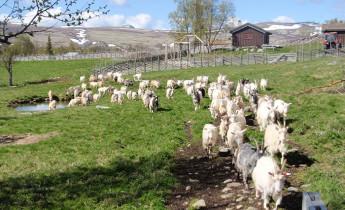 Sollia Prestegård/Øverdalssetra – Aktiviteter