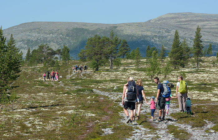 Rondetunet-Voldalen-Bjonnholia-01