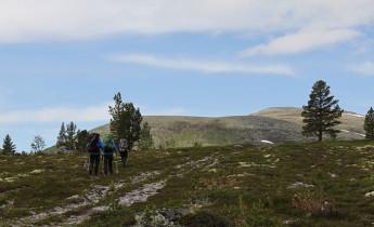 Rondetunet – Voldalen – Bjørnhollia