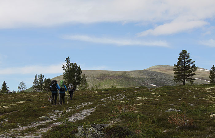 Rondetunet-Voldalen-Bjonnhollia-01