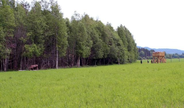 Norsk Elgsenter_plattform_foto Norsk Elgsenter